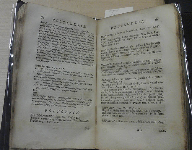 Jan Frederik Gronovius, Flora virginica exhibens plantas quas v.c. Johannes Clayton in Virginia observavit atque collegit, 1743.