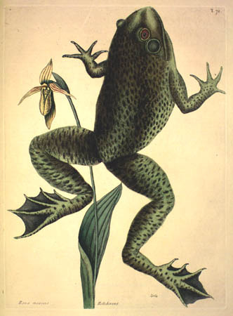 Mark Catesby. The Natural History of Carolina, Florida, and the Bahama Islands