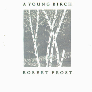 1946 (A Young Birch)