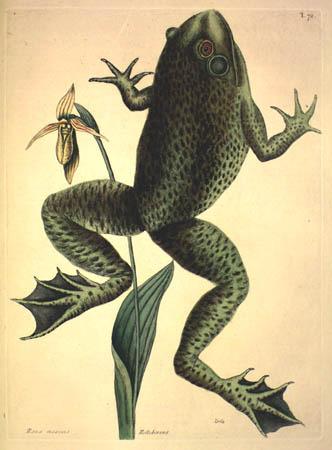 Mark Catesby. The Natural History of Carolina, Florida, and the Bahama Islands