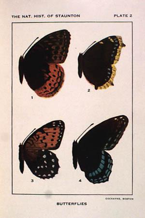 William Alphonso Murrill. The Natural History of Staunton, Virginia