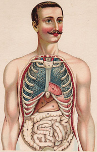 Furneaux, William S., ed. Philips&amp;#039; Popular Mannikin or Model of the Human Body. London: George Philip, [between 1900 and 1910?].&lt;br /&gt;<br />